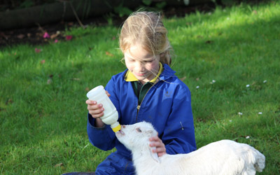 Bottle feeding a young lamb